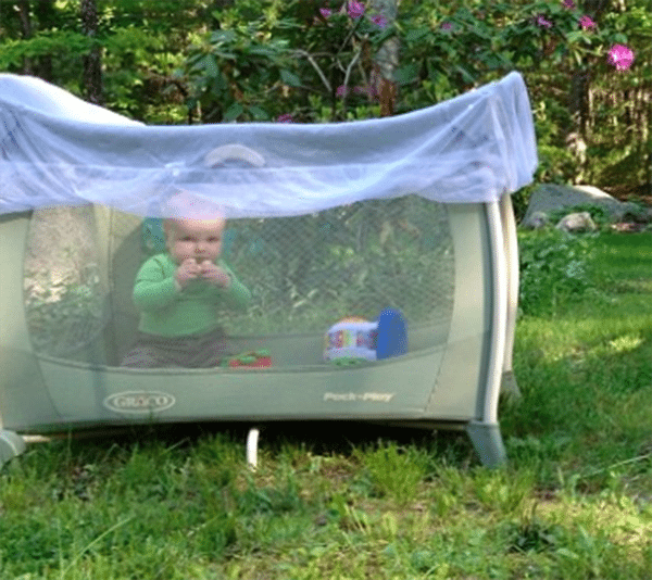 baby in playpen with bug net covering it