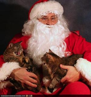 two cats hissing on Santa's lap