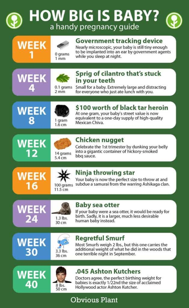 Chart weeks of pregnancy Pregnancy Weight