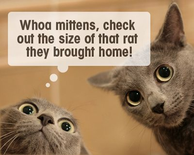 Cats looking surprised - Top Tips for Introducing Pets to Your Baby