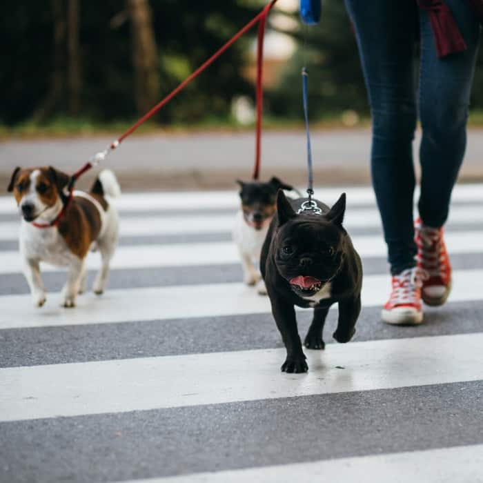 three dogs out for a walk
