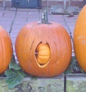 pumpkins giving birth
