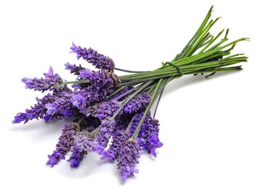 lavender to help baby sleep
