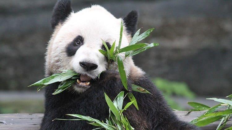 Christmas ideas for babies: Zoo Membership