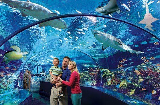 Good gifts for babies: Aquarium Membership