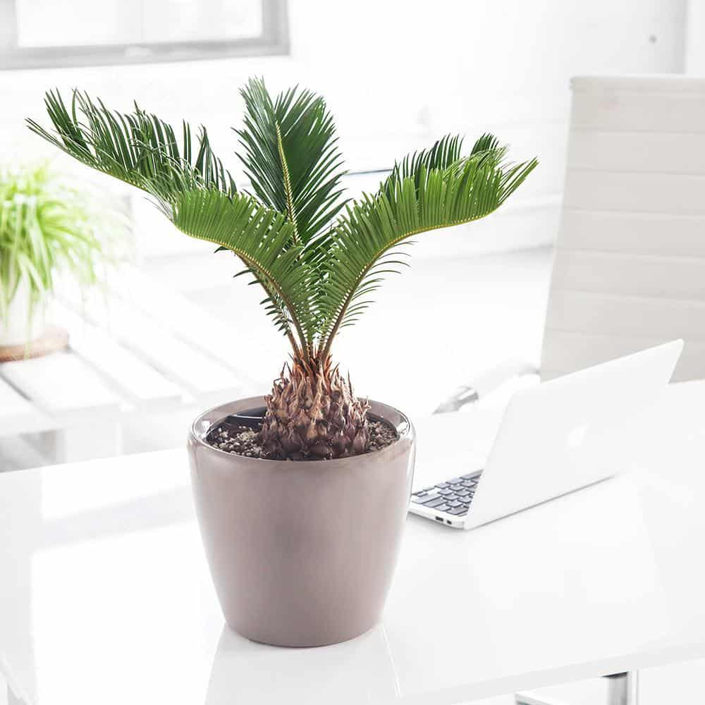 Baby Safety Checklist: Remove toxic houseplants