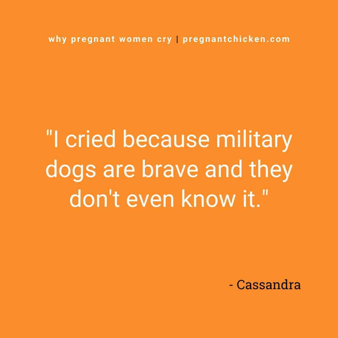"""Reasons pregnant women cry series, text reads """"I cried because military dogs are brave and they don't even know it."""""""